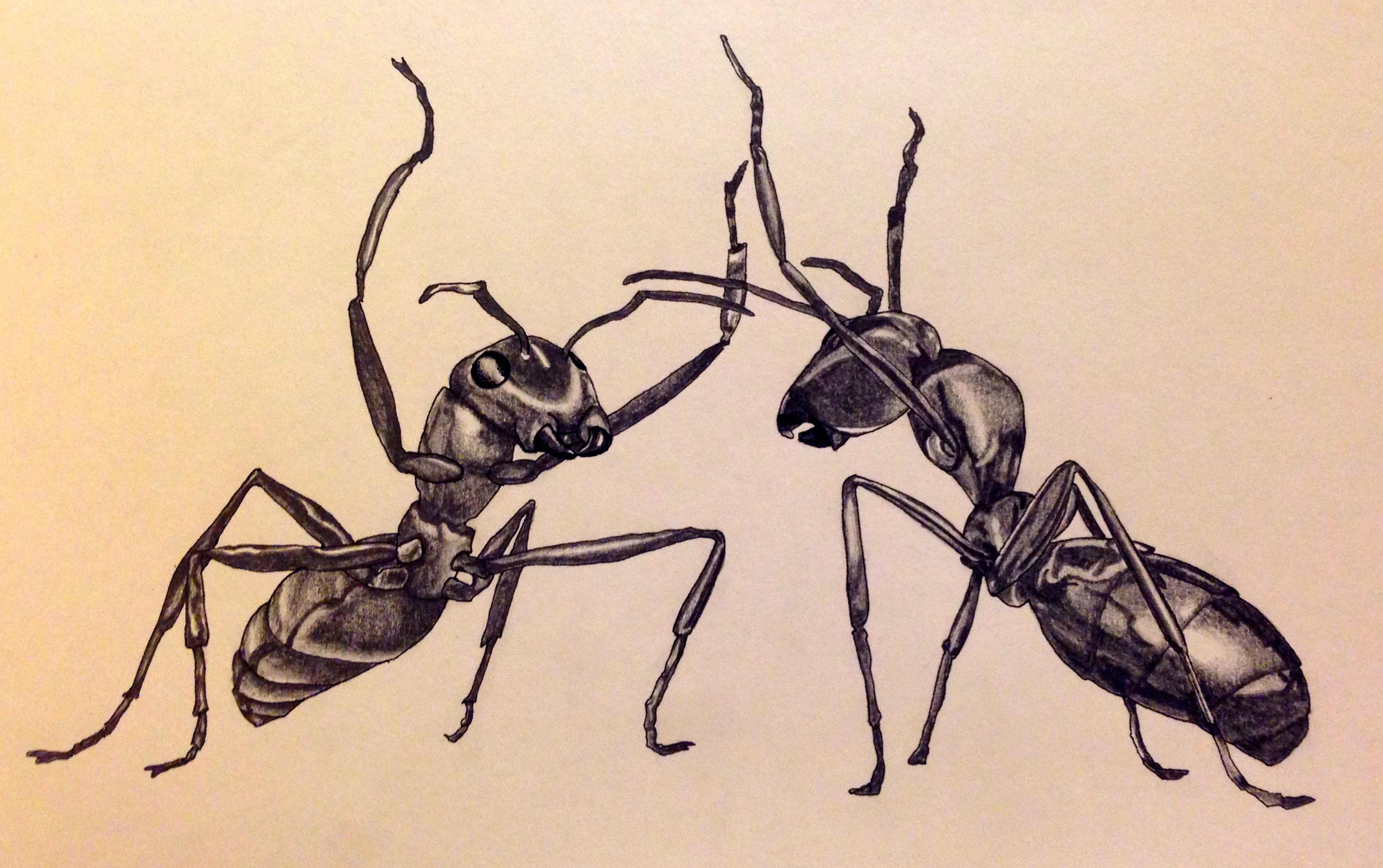 Anatomy Of Ants The Best Ant 2017